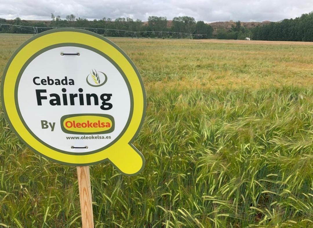 Cebada Y Trigo En Palencia Y Burgos